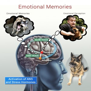 Negative Response Pattern Emotional Memories