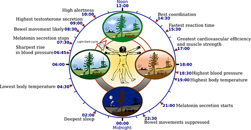The Connection Between Solar Activity, Volcanic Eruptions and Earthquakes, Weather and Cycles on Earth- Biological-clock-human-2