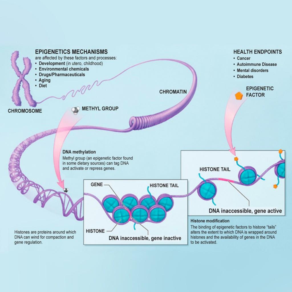 You Can change Your DNA Epigentetics chart
