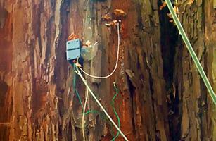 Tree sensor