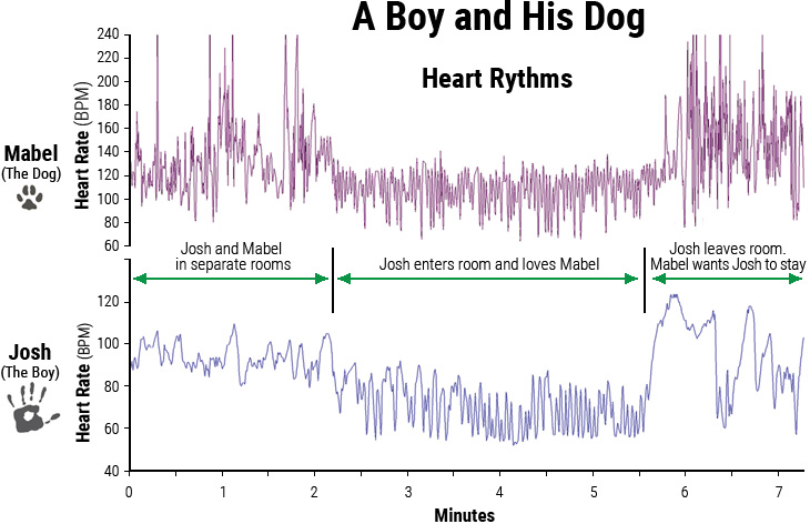 Heart-rhythm patterns of a boy and his dog