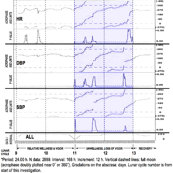 24-hour Synchronization of Circadian Vascular System
